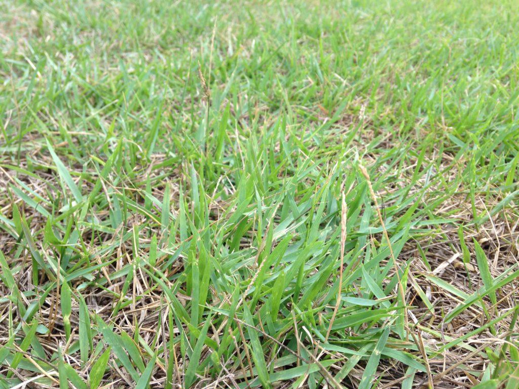意外と奥深い!芝の種類と使い分け | 京都庭匠 植清